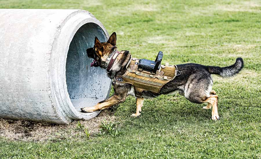 Tactical Electronics Core K9 Video System